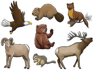 JR RANGER Various animals