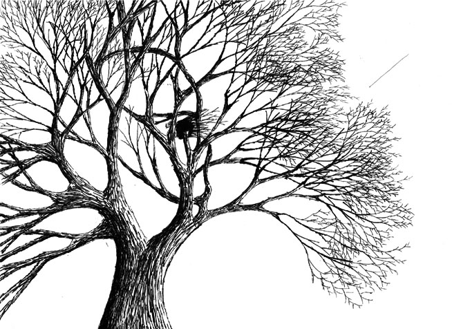 Optical Illusion Faces In Tree Download