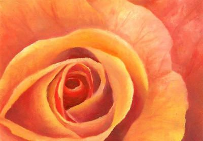 Little Peach Rose by Artman225