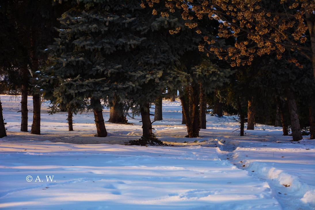 A park's winter by Alaarips