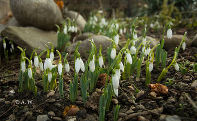Spring's soldiers by Alaarips