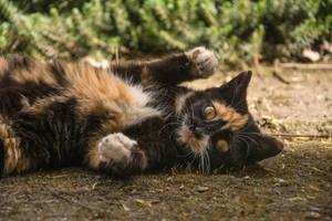 Hi, kitty by Alaarips