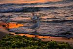 Early birdy by Alaarips