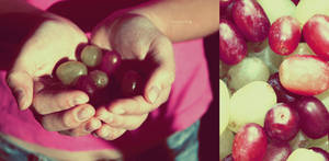 Vine production