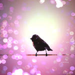 Bird in bokeh