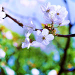 The spring air