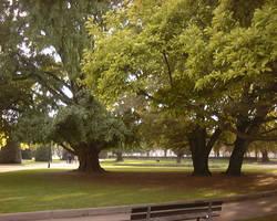 Trees by SeraphimStock