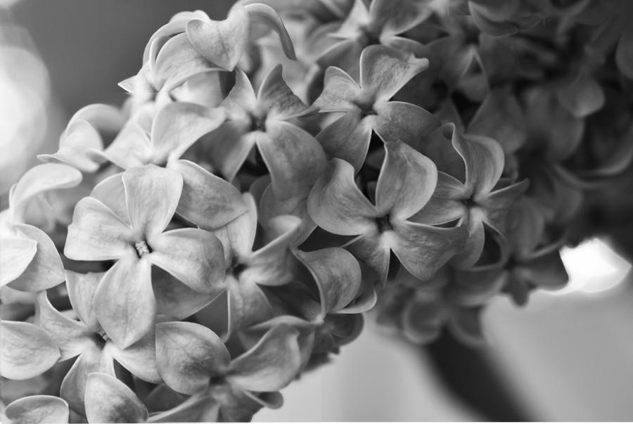 Timeless Lilacs by Dorkasorus