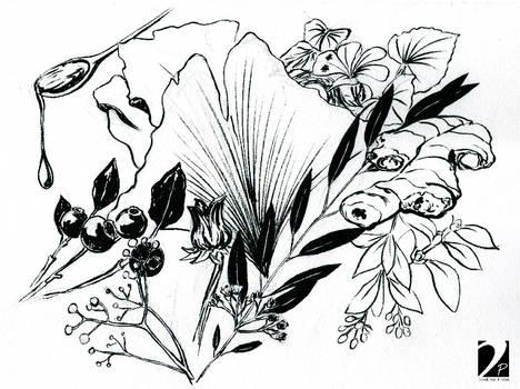 Plants Sketch