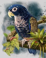 Pionus-chalcopterus-Juanchi by zigze