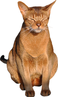 cat png with transparent background 1