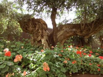 Splitting Tree by SolitariusWolf