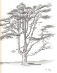Tree by toshina