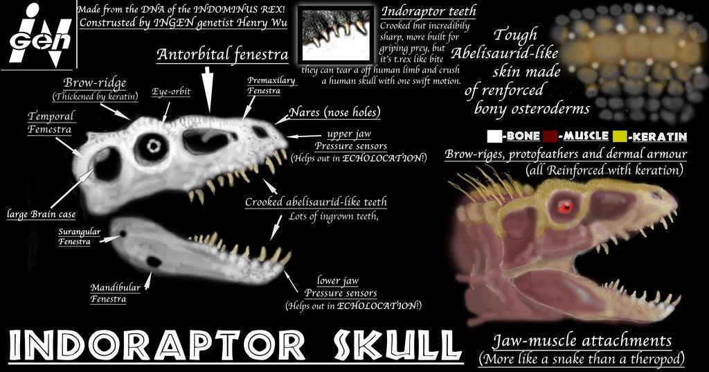 Jpquestions Anatomy Edition Indoraptor Skull By Taliesaurus On