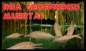 NATIVE JP WILDLIFE 4- INIA GEOFFRENSIS MUERTAS