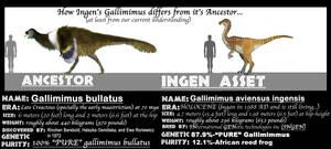 ASSETS MEET ANCESTORS- GALLIMIMUS