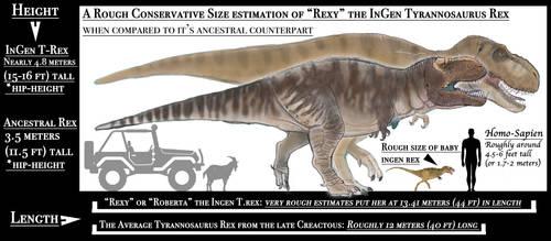JPCHART: Rexy Size Graph
