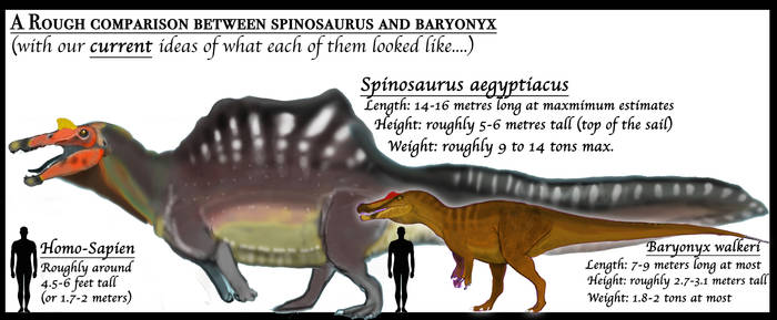 PALEOART: Showing how derived spinosaurus is...