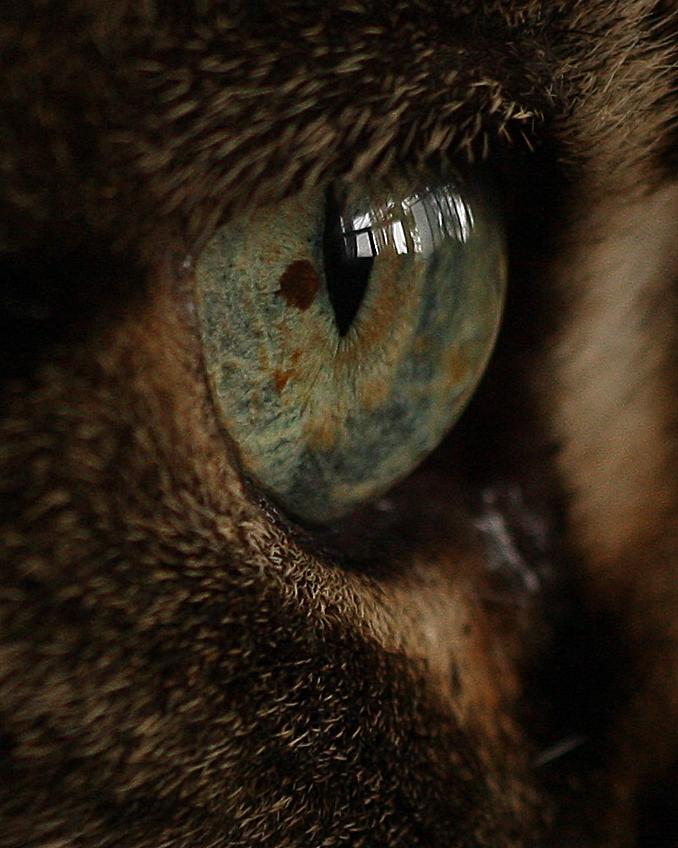 Cat's Eye by BonsEYE