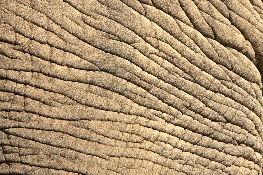 Elephant Skin by BonsEYE
