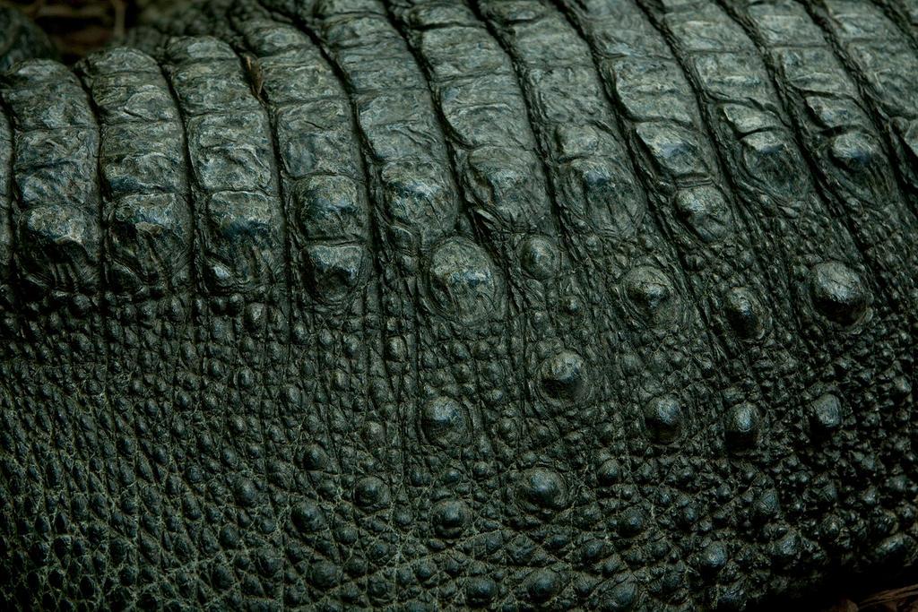 Alligator Skin by BonsEYE