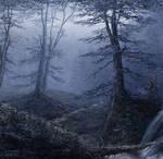 misty rain forest 1