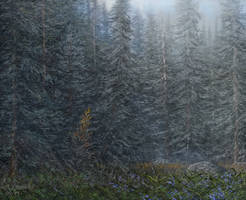 alaska rain forest attempt by andrekosslick