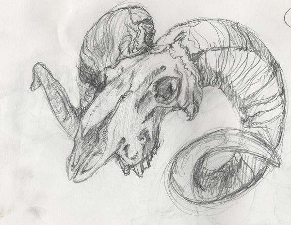 Bighorn Sheep Skull by DogScream on DeviantArt