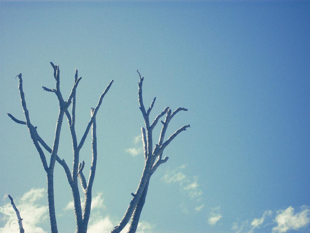 Reach by Cervidae-Canter