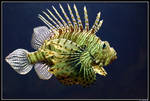 Lion fish by Koekiemonster