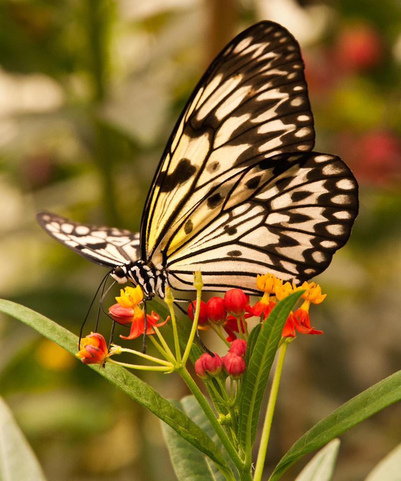 Butterfly - London Zoo by khufus