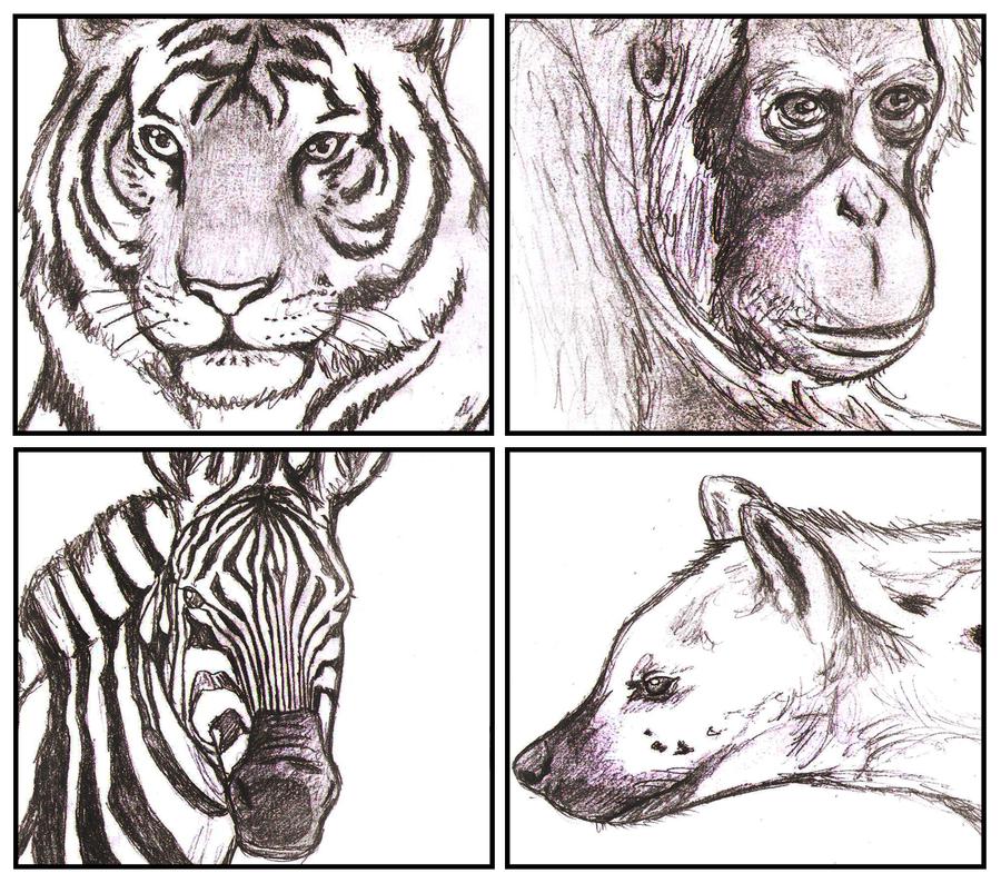 Life of pi animals by bluekensou on deviantart for Life of pi animals