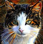 Cat by ShuY83