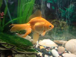 Fish Stock 1 by nicollemariemiller