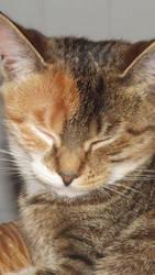 Evie Sleeping