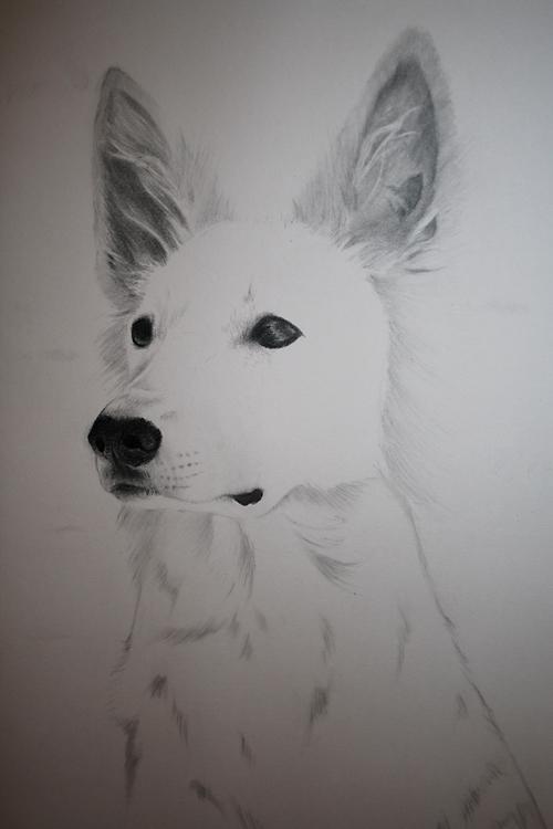 Jolie of White Rewyr by Rimfrost