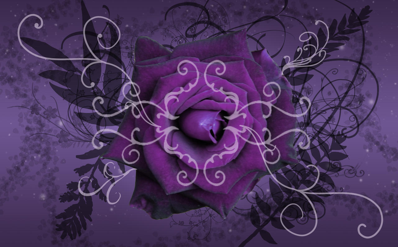 Purple Twilight Rose Wallpaper by silverperfume