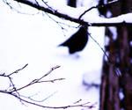dark spot by Accendo-Anima