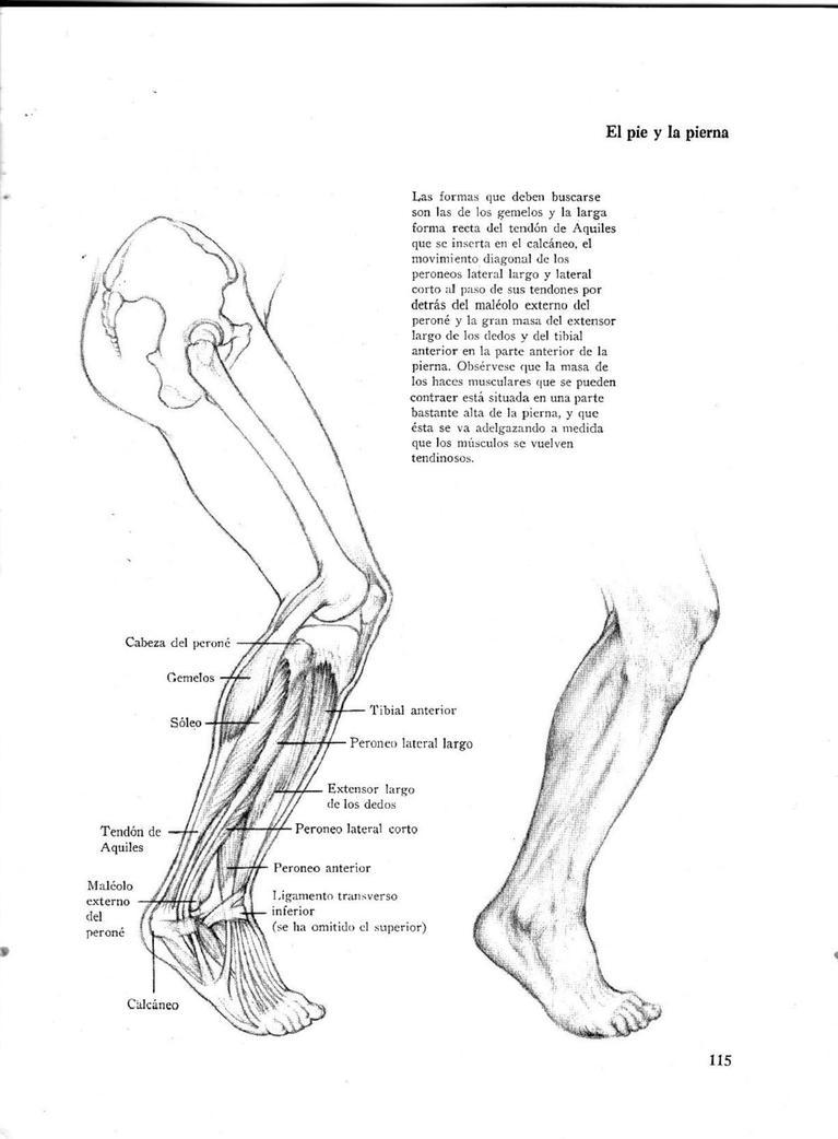 Anatomia Humana by Kishimoto666 on DeviantArt