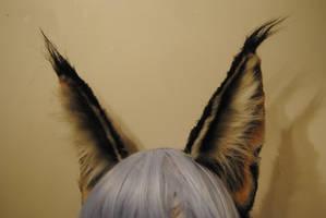 caracal ears by baarakka
