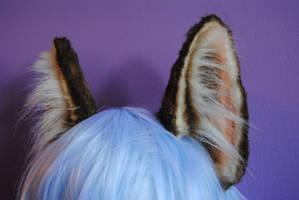 jackal ears by baarakka