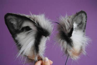 wolf ears by baarakka