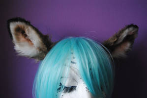 doe/fawn ears by baarakka