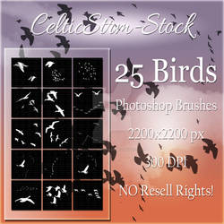 Bird Brushes by CelticStrm-Stock