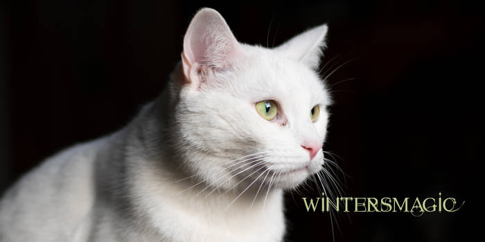 Wintersmagic