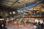 China's Sauropodomorpha and Prosauropoda