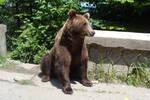Brown bear STOCK