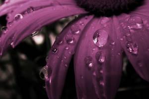 Flower macro by NorbertKocsis