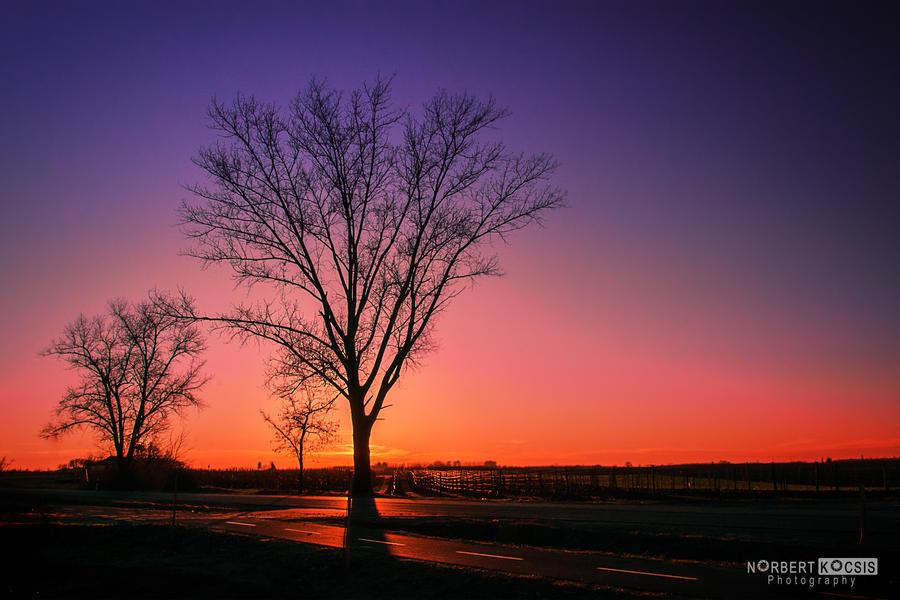 Hidden in sunset by NorbertKocsis