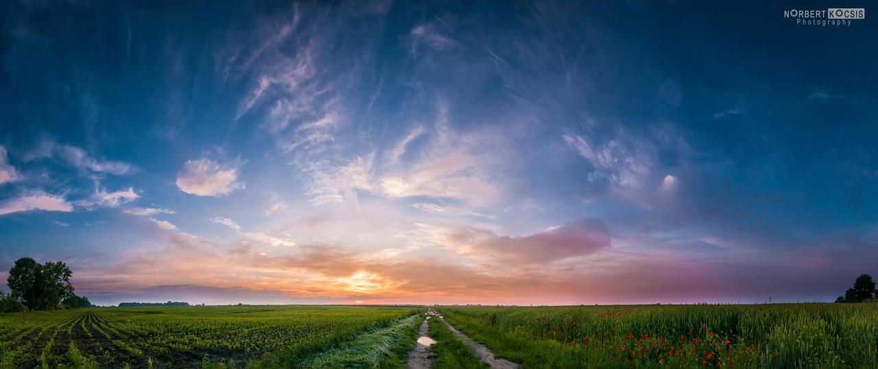 Fresh Vegetation by NorbertKocsis